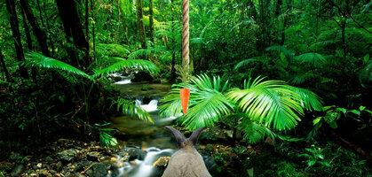 Dangling_Carrot_Level2-AmazonRainForest.jpg