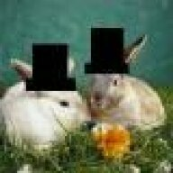 rabbits with hats